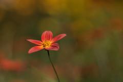 couleurs d'été (christophe.laigle) Tags: rouge christophelaigle fleur macro nature flower fuji xpro2 xf60mm red