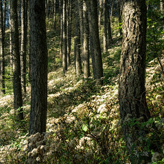 2018 Fluffy woods (jeho75) Tags: sony ilce 7m2 zeiss italy fluffy forest woods flauschig ialia italien lago di garda pflanzen plants