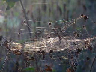 WWW - Woold's Wide Web