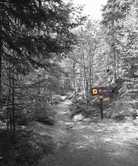 Follow the Path (Cindy's Here) Tags: followthepath lakesuperiorprovincialpark trail pictographs selectivecolor woods park 118 31