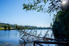 03092018-DSCF1019-HDR-2 (Ringela) Tags: hdr österdalälven leksands rastplats september 2018 sweden river nature tree fujifilm xt1