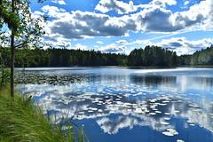 Nuuksio National Park(ヌークシオ国立公園) in Finland(Nikon D850 sigma 24mm f1.4 art ) (Ryuzin Taketomi) Tags: nikon sigma nuuksio finland 24mm d850 forest