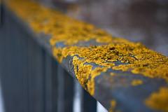 The yellow balustrade (iamunclefester) Tags: münchen munich yellow moss bridge balustrade handrail