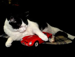 """Ozzy"" (EcoSnake) Tags: ozzy cats friends pets cars ferrari"