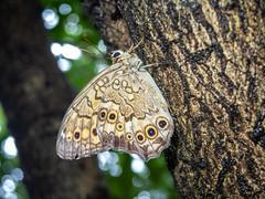 180902 Donosaka Park.jpg (Bruce Batten) Tags: animals arthropods donosaka honshu insects invertebrates japan locations machida parks plants subjects tokyo trees