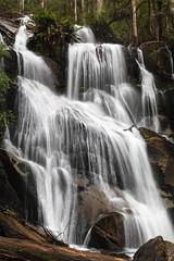 (Laszlo Papinot) Tags: noojee toorongofalls waterfall water rocks cascade tree fern vegetation famousflickrfive littletoorongoriver river