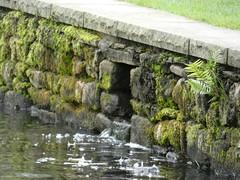 Wall Wednesday (David JP64) Tags: towneley hall pond random stone wall burnley lancashire