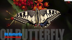 Borboletas (Carlos Santos - Alapraia) Tags: butterfly borboleta ngc ourplanet animalplanet canon nature natureza wonderfulworld highqualityanimals unlimitedphotos fantasticnature