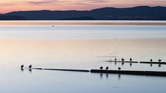 Presenze (Cristiano Pelagracci) Tags: nature water trasimeno umbria