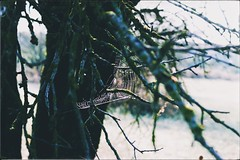 Enchanted nature (PattyK.) Tags: ioannina greece grecia griechenland hellas ellada snapseed ιωάννινα ελλάδα epirus ipiros balkans nikond3100 europe europeanunion nature september autumn 2019 φθινόπωρο σεπτέμβριοσ φύση δέντρα βαλκάνια ευρώπη trees web spiderweb ιστόσ