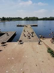kingsmill reservoir (kelvin mann) Tags: kingsmillres kingsmillreservoir reservoir ashfield mansfield water ducks nottinghamshire notts