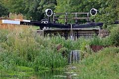 old lock gates J78A1573 (M0JRA) Tags: canals birds flight flying wildlife rats walks gardens parks fields trees lakes ponds ducks swans rspb