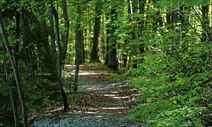 walking... (Gabi Wi) Tags: naturschutzgebiet naturereserve wald forest schwabenland natur nature lichtschatten lightshadow grün green frühling springtime waldweg path