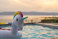 Rainbow Unicorn on Golden Water (aaronrhawkins) Tags: rainbow unicorn swimming pool toy float floating gold golden bearlake gardencity shore blue aquamarine reflection utah vacation memories aaronhawkins