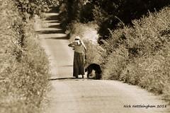 Dog Walk 0137 (Nick Nettleingham) Tags: dog walk lane trees