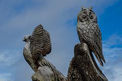 Don't Move!! (BGDL) Tags: lightroomcc nikond7000 afnikkor70300mm1456g bgdl rozellepark ayr carvings sculptures tree birdsbirdsbirds week34 weeklytheme flickrlounge