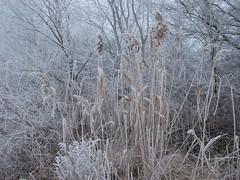 Zúzmara (vonatpotlo) Tags: zúzmara rime tél winter