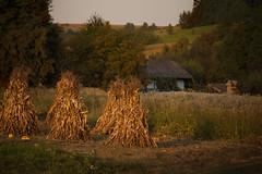 autumn came to the village (proffkom_) Tags: ukraine village autumn vintage oldlens manual m42