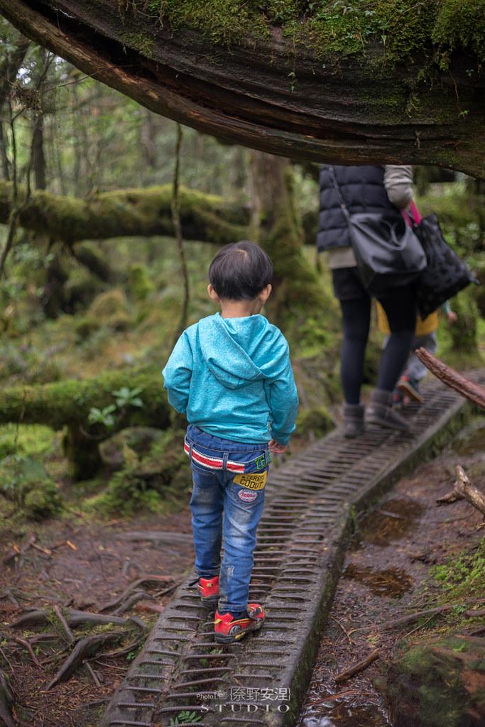 太平山翠峰湖環山步道 |走在泥濘的道路上,只為途中美景 | 宜蘭大同鄉35