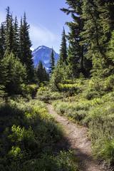 The Journey (Joshua Johnston Photography) Tags: oregon pacificnorthwest pnw joshuajohnston mounthoodnationalforest mthood hiking samyangaf35mmf28