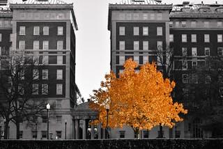 autumn in mono