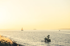 Dream in yellow. (Pablin79) Tags: landscape colors light goldenhour sun sunset afternoon outdoors river water reflections tree rocks coast ships sailboat silhouettes shadows posadas misiones argentina