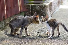 Cats (takapata) Tags: sony sel90m28g ilce7m2 cat neko 猫さん