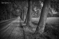 Dreef (Geert E) Tags: retie kasseiweg cobblestone dreef laan lane bomen trees zwartwit blackwhite