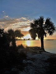 Sunset on St. George Island (ckorfanty) Tags: sunset sunlight sun beach palm tree bluee clouds sky shore sand stgeorgeisland
