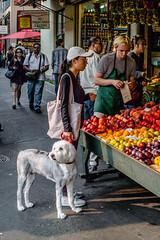 _DSC0964.jpg (jaғar ѕнaмeeм) Tags: pikeplacemarket streetphotography washington seattle street