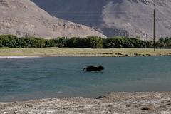 Panj river, Wakhan