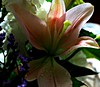 The Light and Dark of it. (Lynn English) Tags: bouquet lily tones naturethroughthelens