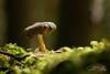 Mushroom bathed in sunlight (SarahW66) Tags: mushroom fungi nature naturalbokeh natural mushrooms macro macrophotography macrolens sigma105mm sigmamacro sigma canon80d canon inthewood intothewoods