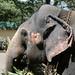 Elephant Profile (1X7A4482b)