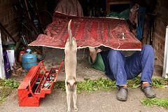 Annual Service (Apionid) Tags: flyingcarpet garage repairs mechanic tools moriarty nikond7000 werehere hereios antigravity transport