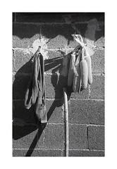 appesi ;/) (schyter) Tags: фэд2 fed 2c jupiter8 silver 1958 lens film pellicola kodak tmax400 320iso рапри э201 rapri e201 spotmeter extintion development adox adonal 150 20 °c homemade scanned epson v600 analogica analogic bw bn bianconero blackwithe 135 35mm homemadescanned allaperto lodigiano lodi analogicait monocromo surreale bianco nero sovietcamera rangefinder basiasco belvignate