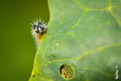 Hi... (N.Batkhurel) Tags: season autumn insects closeup mongolia macro bulgan ngc nikon nikond5200 natur nikkor 105mm