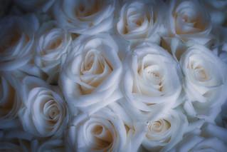 Roses ... ✅💕