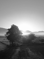 The day begins ... (Thierry GASSELIN) Tags: aube sunrise bw nb monochrome arbre tree mountain montagne