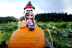 🐼❤️ (sugarelf) Tags: pandappleoutfit blythe doll pumpkins autumn garden urbancowgirl handmadeoutfit pacificnorthwest farmlands kawaii petcat naturephotography pandapplegirl
