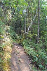 2018-08-18 Whistle Lake Trail 205 (20) (680x1024) (-jon) Tags: anacortes skagitcounty skagit fidalgoisland sanjuanislands washingtonstate washington pnw pacificnorthwest salishsea pugetsound acfl anacortescommunityforestlands whistlelake lake trail path 205 nikon nikonl22 tree douglasfir fern alder summer woods forest a266122photographyproduction hiking hike walk walking
