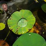 Water plant nursery, Chiang Mai, Thailand thumbnail