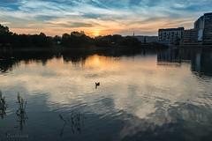Lake Strkovec (Ranildum) Tags: lake duck sky sun sunset bratislava slovakia canon canoneos77d tamron tree wood river water boat dusk
