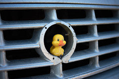 Autogrill - or: The grilled duck (iamunclefester) Tags: münchen munich duck yellow grille radiator grill nikon d7200 nikond7200