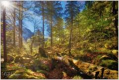 Bergwald (Karl Glinsner) Tags: landschaft landscape österreich austria oberösterreich upperaustria berge mountains mountain salzkammergut outdoors wald woods bäume trees moos moss