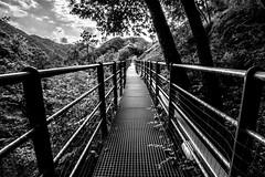 Path of what?, Vobbia, Liguria, Italy (Davide Tarozzi) Tags: pathofwhat montagna sentiero castellodellapietra mountain bosco albero tree wood woodland wild