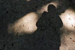 5 - Ecuisses (Bourgogne), La Villa Perrusson et son jardin, Ombre et lumière (melina1965) Tags: août august 2018 panasonic lumix dmctz57 bourgogne burgondy saôneetloire écuisses villaperrusson jardin jardins garden gardens sol sols pavement ombreetlumière lightandshade