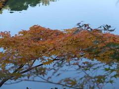 a (59) (hiromi89) Tags: japan beauty beautiful scenery flower wood pond