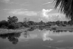 Reflective Landscape (PositiveAboutNegatives) Tags: leica leitz rangefinder leicam3 m3 50mm 50mmsummierendr dualrange yellowfilter film analog bw blackandwhitefilm hc110 coolscan florida
