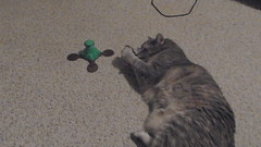 DSCN3216 (mestes76) Tags: 100617 duluth minnesota cats pets fetty fettucini cattoys butterflies playing